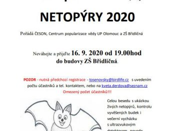 Mezinárodní noc pro netopýry 2020